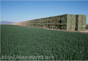 Alfalfa stack variability